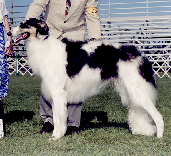 Borzoi Canada Regional 2004 Best in Sweeps