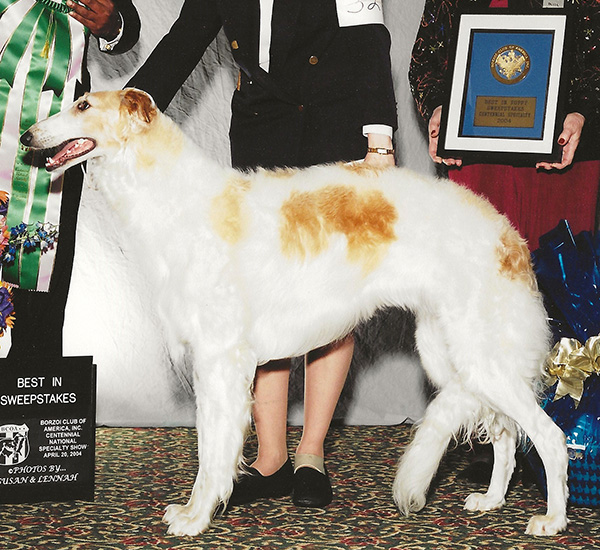 Borzoi Canada Regional 2004 Best Opposite in Sweeps