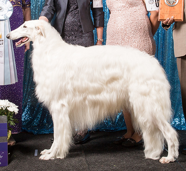 Borzoi Canada Best of Breed