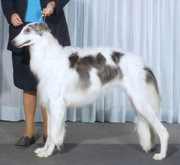 Borzoi Canada Ontario Regional 2004 Best of Opposite Sex
