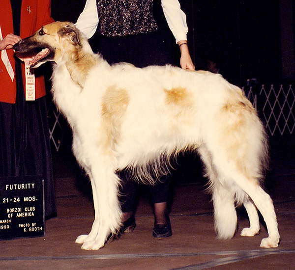Borzoi Club of Ontario 1992 Best in Specialty